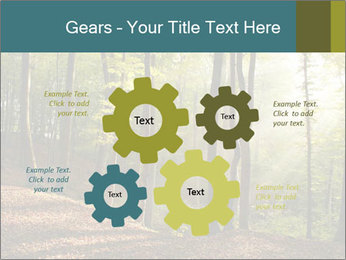 Backlight In Forest PowerPoint Template - Slide 47