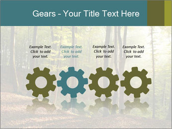 Backlight In Forest PowerPoint Template - Slide 48