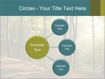 Backlight In Forest PowerPoint Template - Slide 79