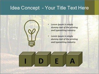 Backlight In Forest PowerPoint Template - Slide 80