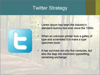 Backlight In Forest PowerPoint Template - Slide 9