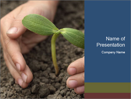 Green sprout in child hand PowerPoint Template