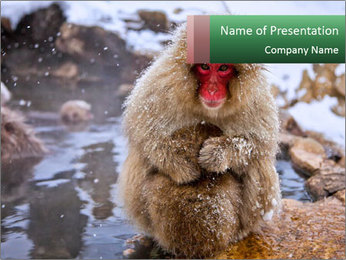 Monkey In Japan PowerPoint Template - Slide 1