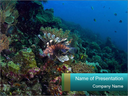 Diving In Indonesia PowerPoint Template