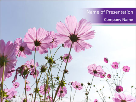 Pink Flower Blossom PowerPoint Templates