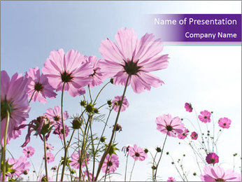 Pink Flower Blossom PowerPoint Template - Slide 1