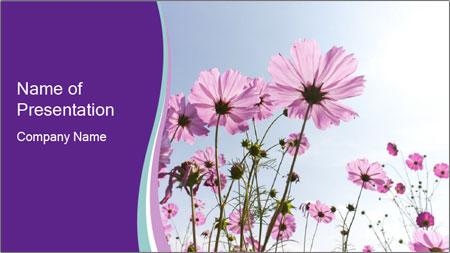 Pink Flower Blossom PowerPoint Template