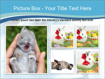 Blue Rabbit PowerPoint Template - Slide 19