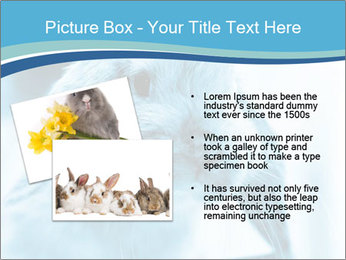 Blue Rabbit PowerPoint Template - Slide 20