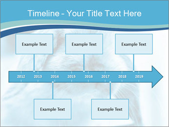 Blue Rabbit PowerPoint Template - Slide 28