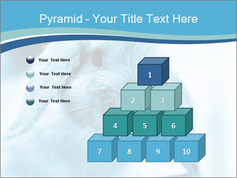 Blue Rabbit PowerPoint Template - Slide 31