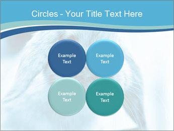 Blue Rabbit PowerPoint Template - Slide 38