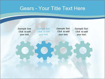 Blue Rabbit PowerPoint Templates - Slide 48