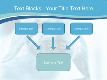 Blue Rabbit PowerPoint Templates - Slide 70