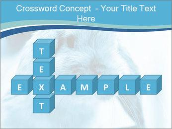 Blue Rabbit PowerPoint Templates - Slide 82