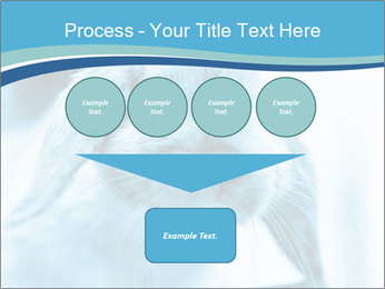 Blue Rabbit PowerPoint Template - Slide 93