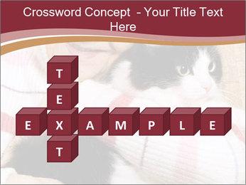 Grandmama Hugs Cat PowerPoint Template - Slide 82