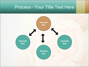Cream Roses PowerPoint Template - Slide 91