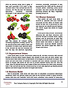 0000090212 Word Templates - Page 4