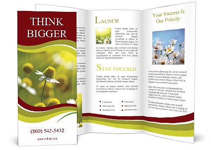 0000090220 Brochure Template