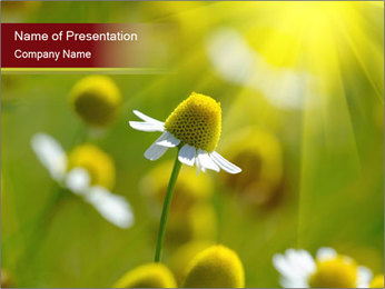 Chamomile medical PowerPoint Template - Slide 1