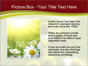 Chamomile medical PowerPoint Template - Slide 13