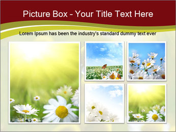 Chamomile medical PowerPoint Template - Slide 19
