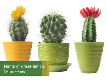 Three Pots With Cactuses PowerPoint Template