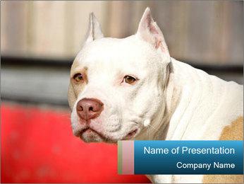 Fighting Bulldog PowerPoint Template