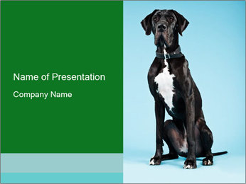 Big Black Dog PowerPoint Template - Slide 1