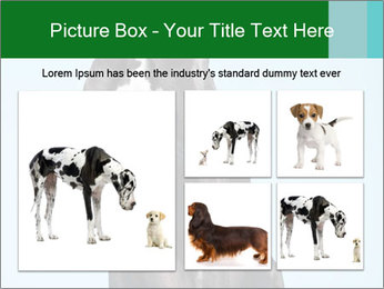 Big Black Dog PowerPoint Template - Slide 19