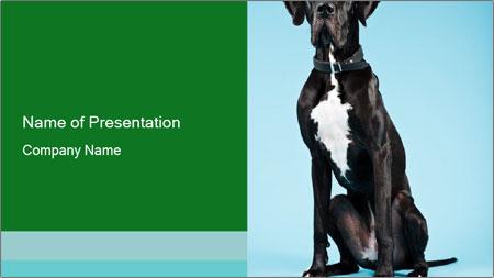 Big Black Dog PowerPoint Template