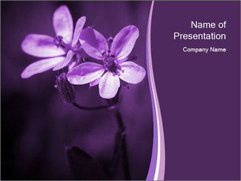 Lilac Flower Bloom PowerPoint Template