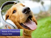 Dog In Headphones PowerPoint Templates