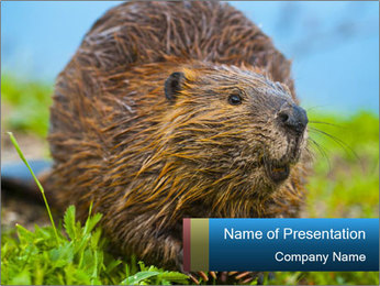 Wild Nutria PowerPoint Templates - Slide 1