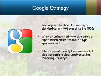 Wild Nutria PowerPoint Template - Slide 10