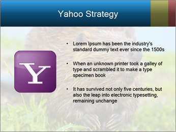 Wild Nutria PowerPoint Template - Slide 11
