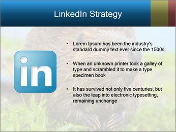 Wild Nutria PowerPoint Template - Slide 12