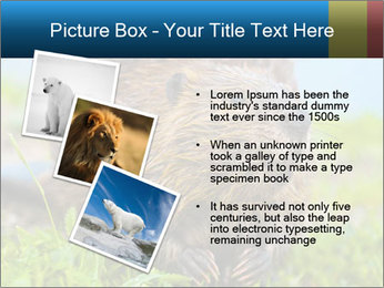 Wild Nutria PowerPoint Template - Slide 17