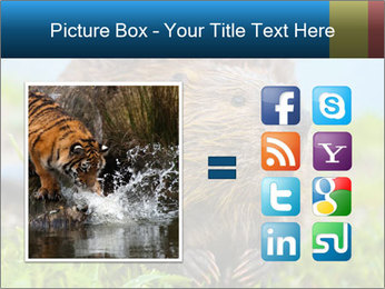 Wild Nutria PowerPoint Template - Slide 21