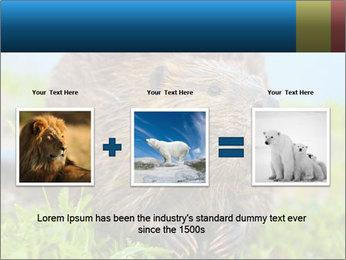 Wild Nutria PowerPoint Template - Slide 22
