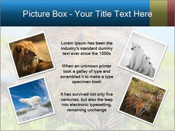Wild Nutria PowerPoint Templates - Slide 24