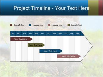 Wild Nutria PowerPoint Template - Slide 25