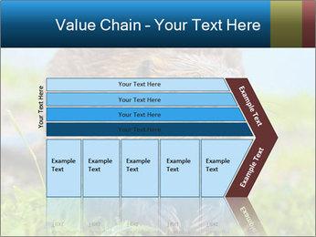 Wild Nutria PowerPoint Template - Slide 27