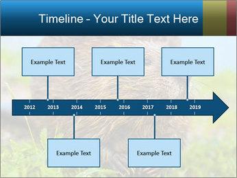 Wild Nutria PowerPoint Template - Slide 28