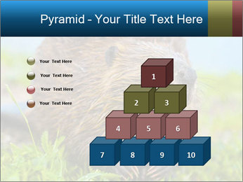 Wild Nutria PowerPoint Templates - Slide 31