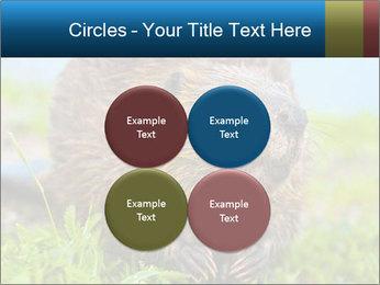 Wild Nutria PowerPoint Templates - Slide 38
