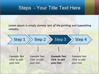 Wild Nutria PowerPoint Templates - Slide 4