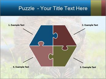 Wild Nutria PowerPoint Templates - Slide 40