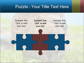Wild Nutria PowerPoint Template - Slide 42